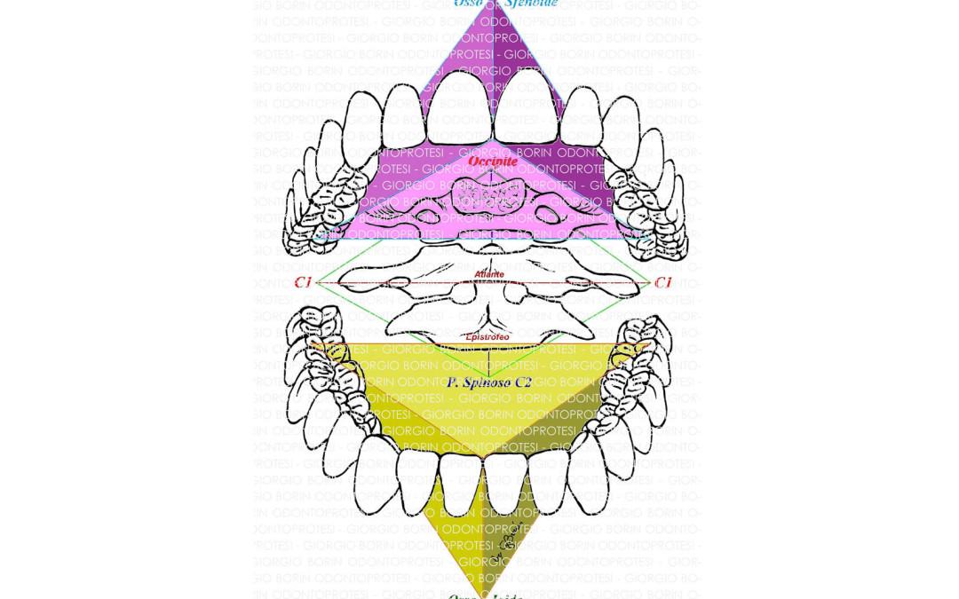 """Corso teorico """"Le asimmetrie craniche e la funzione occlusale, la protesi totale, il bite R.O.F… ma non solo"""""""